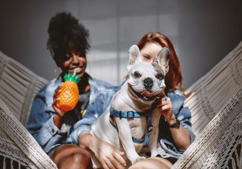 coworking-cachorro-pet-friendly